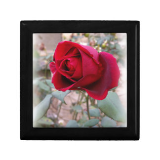 letzte Rote Rose Geschenkbox