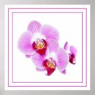 Leuchtende Orchideen-Nahaufnahme-Fotografie Poster