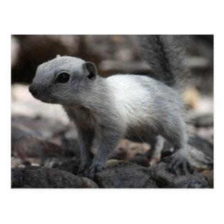 Leucistic weiße Eichhörnchen-Postkarte Postkarte