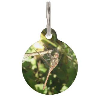 Libelle auf einer tiernamensmarke