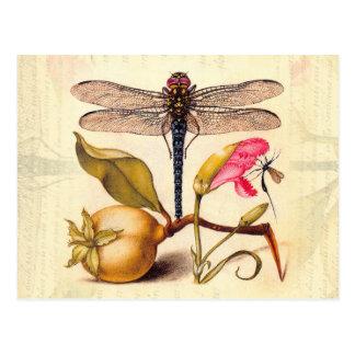 Libelle, Birne, Gartennelke und Insekt Postkarte