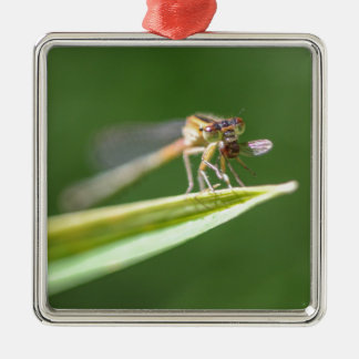 Libelle, die Moskito isst Quadratisches Silberfarbenes Ornament