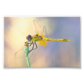 Libelle einiger Farben Fotodruck