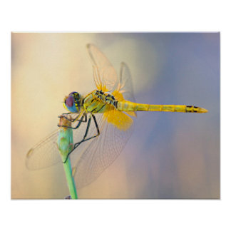 Libelle einiger Farben Poster