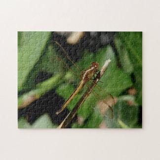Libelle, Foto-Puzzlespiel Puzzle