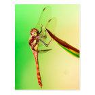 Libelle Postkarte
