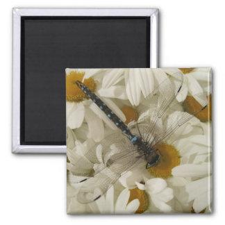Libelle Quadratischer Magnet