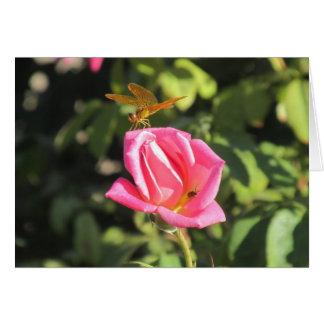 Libelle und Marienkäfer auf rosa Rose Karte