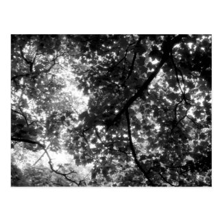 Licht durch die Bäume Postkarte