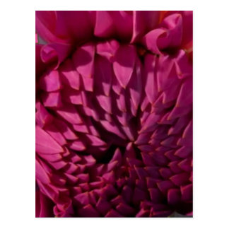 Liebe-Ausdrücke - Blumen-exotisches rotes lila Postkarten
