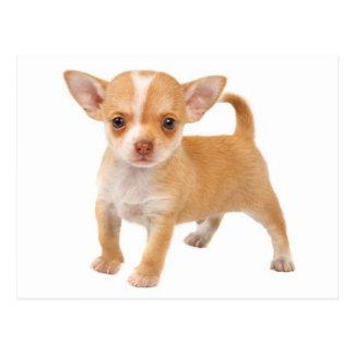 Liebe-Babychihuahua-Welpen-Hundepostkarte Postkarte