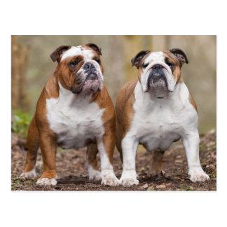 Liebe-englische Bulldoggen-Welpen-Hundepostkarte Postkarten