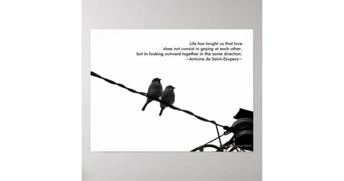 Liebe - Foto-Liebe-Zitat-Druck der Poster   Zazzle