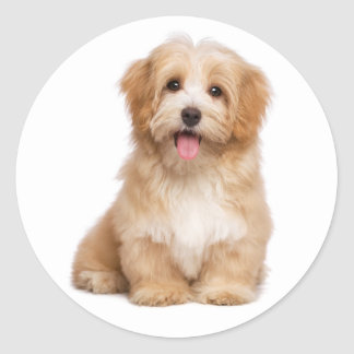 Liebe Havanese TAN Welpen-Hund hallo Runder Aufkleber
