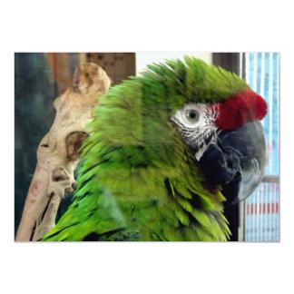 Liebe I Macaws! Karte