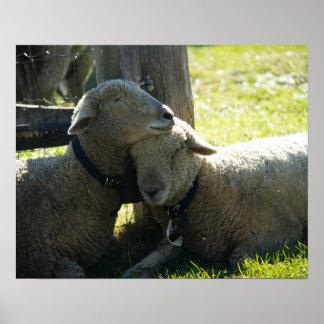 Liebe-Mutterschaf-Schafe Poster