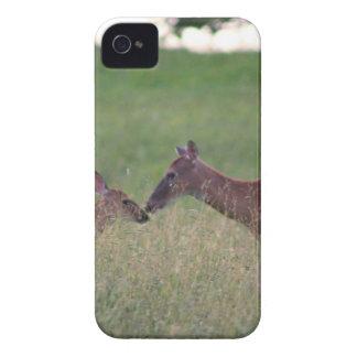 Liebe Sie Rotwild iPhone 4 Hüllen