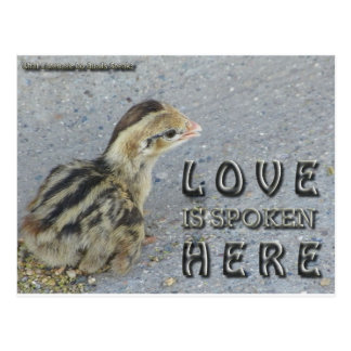 Liebe wird hier gesprochen postkarte