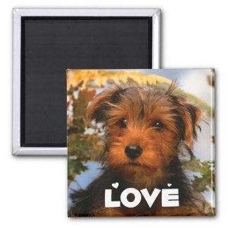 Liebeairedale-Welpen-Hundemagnet Quadratischer Magnet