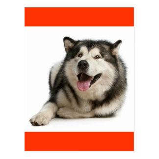 Liebealaskischer Malamute-Welpen-Hundepostkarte Postkarte