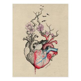 Liebekunst verschmolz anatomische Herzen mit Postkarte
