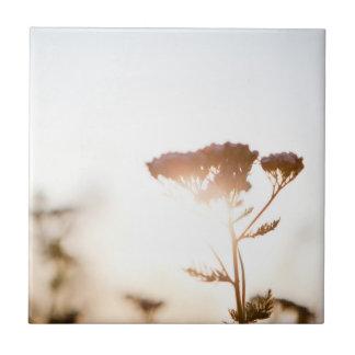 Lightgras #2 kleine quadratische fliese
