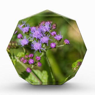 Lila Ageratums-Wildblumen Acryl Auszeichnung