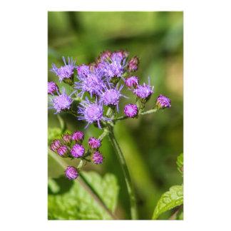 Lila Ageratums-Wildblumen Briefpapier