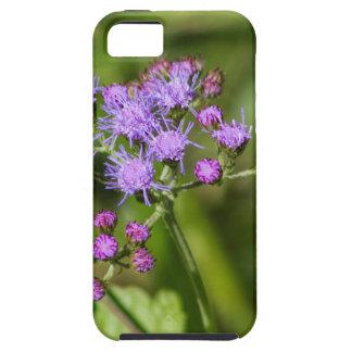 Lila Ageratums-Wildblumen Etui Fürs iPhone 5