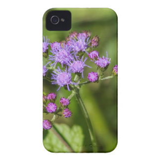 Lila Ageratums-Wildblumen iPhone 4 Cover
