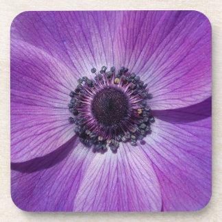 Lila Anemonenblüte Getränkeuntersetzer