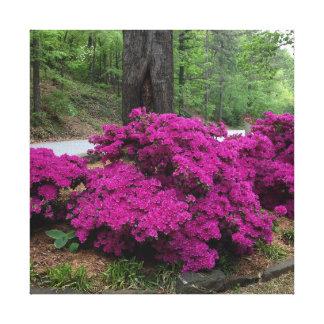 Lila Azaleen-Büsche in der Blüte Leinwanddruck