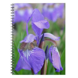 Lila blaue Flaggen-Iris-Blumen-Natur Notizblock