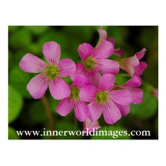 Lila Blumen Saba Postkarte