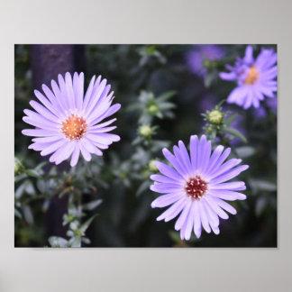 Lila Blumen-Sommer-Natur-Fotografie mit Blumen Poster