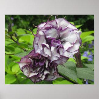 Lila Blüten-Plakat-Drucke