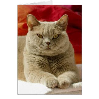 Lila britische shorthair Katze Grußkarte