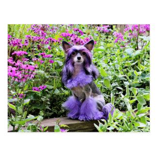 Lila chinesischer Hund mit Haube in den rosa Postkarte