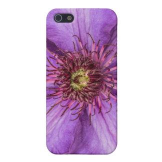 Lila Clematis-Blume Etui Fürs iPhone 5