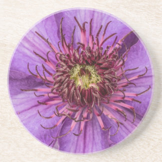 Lila Clematis-Blume Getränkeuntersetzer