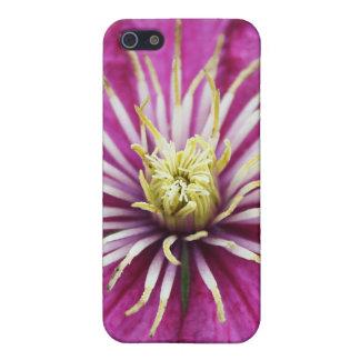 Lila Clematis-Blume in der Blüte während des iPhone 5 Cover