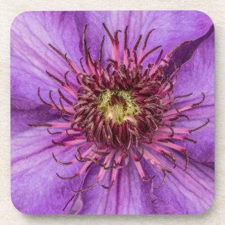 Lila Clematis-Blume Untersetzer