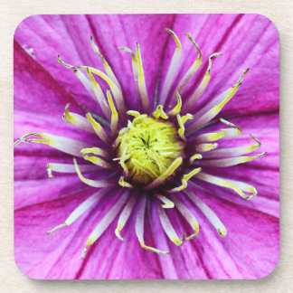 Lila Clematis-Blumenblüte Getränkeuntersetzer