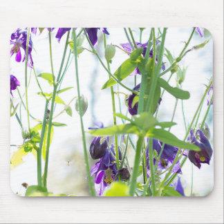 Lila columbine Blumen der Blendung in der Natur Mousepad