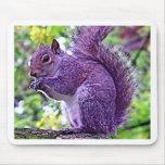 Lila Eichhörnchen Mousepads