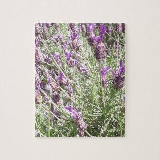 Lila französischer Lavendel-Blumen Puzzle
