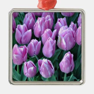 Lila Frühlingstulpen Silbernes Ornament