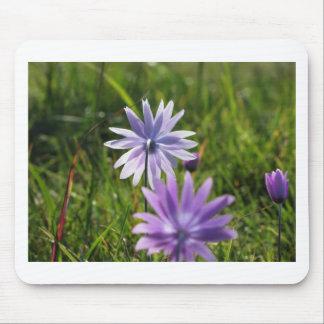 Lila Gänseblümchen-Blumen auf grünem Hintergrund Mousepad
