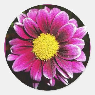 Lila Gänseblümchen-runder Aufkleber