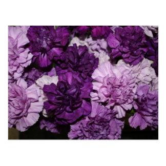 Lila Gartennelken-Blumen-Anordnung Postkarten
